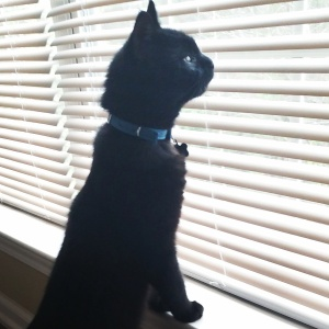 Shadow the PR Cat