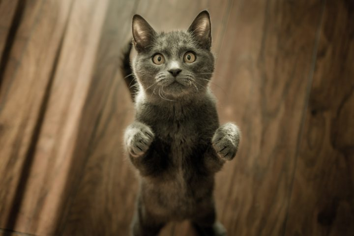 Alley Cat Allies Congratulates New York Legislature for Passing DeclawingBill